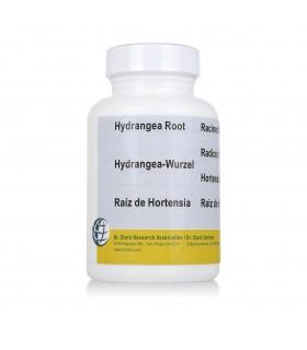 Hydrangea en Gélules - Hortensia - Dr Clark